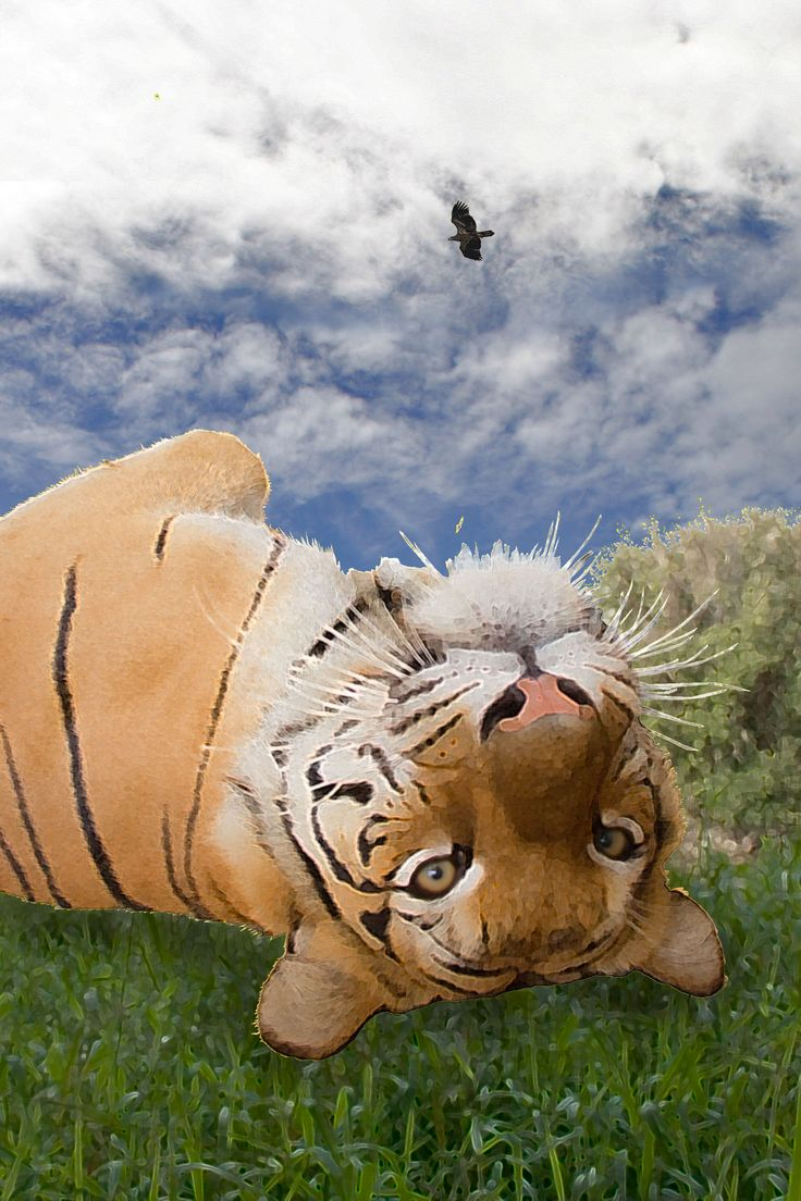 I've even talked with a silly & goofy tiger, one of my best days ever. Learn more about our animal communication at http://animalhealings.com/