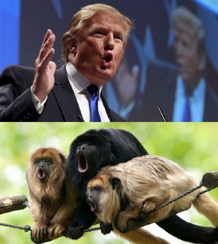 donald-trump-speech-face-reaction-vs-monkeys-reaction-funny-look-like-hilarious-memes-10-trump-funny-memes