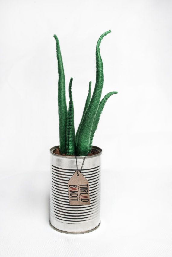 Best 25 green cactus ideas on pinterest cactus plants for Cheap quirky homeware