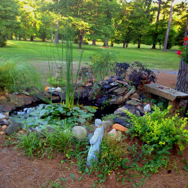 Backyard goldfish pond images for Goldfish pond ideas