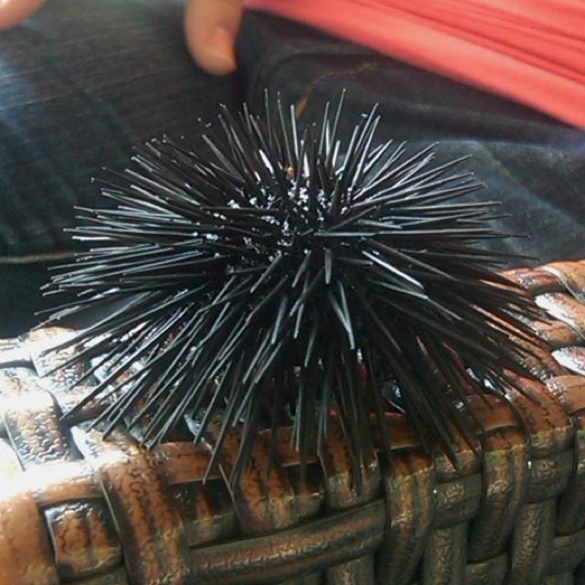 Sea urchin in Poros, Kefalonia.
