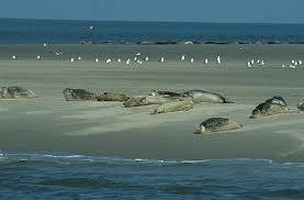 Hoewel ik graag naar het buitenland ga, is het Waddenzee-gebied toch wel mijn ultieme vakantieplek.