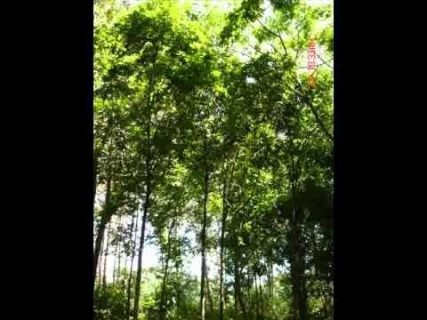 Canciones Sobre el Medio Ambiente, Hay que Hacer Alberto Peralta G.- Uses si clauses and the future ten