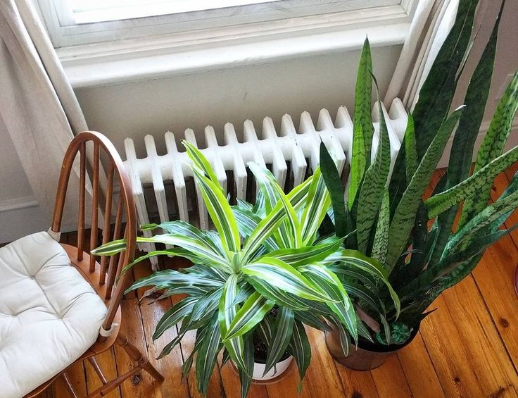 481 Best Plants For Indoors Images On Pinterest Indoor Plants Air Cleaning Plants And