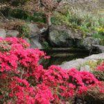 Ayrlies Garden, Howick, Auckland