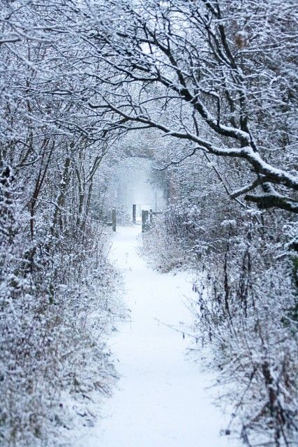 This looks like such a magical path!! I'd love to walk there slowly, savoring the winter hush and the smell of fresh snow. <3