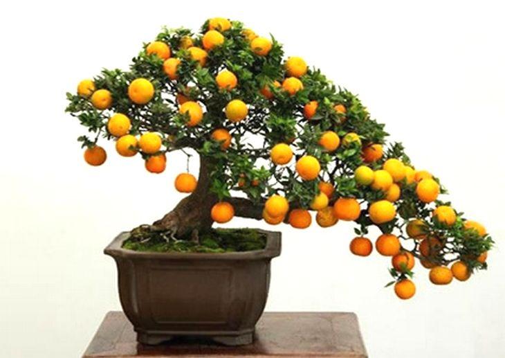 Você pode plantar suas próprias frutas em casa, graças a técnica japonesa de bonsais. Saiba como fazer e comece hoje seus planos de jardinagem!