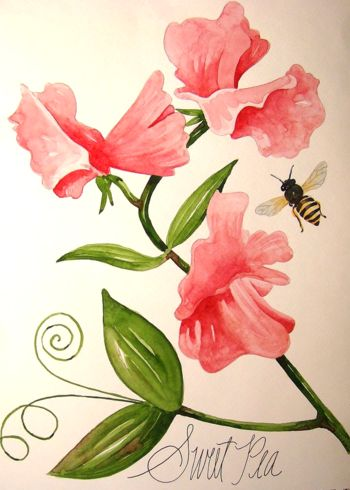 April Birth Flower Drawing Sweet Peas Are The Birth