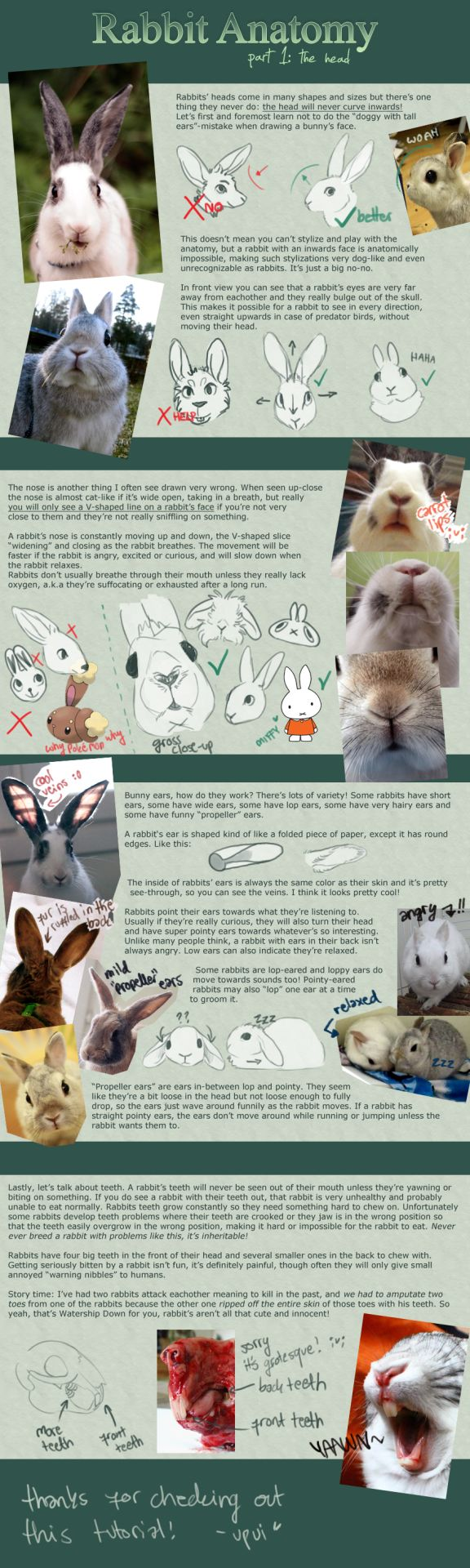 Rabbit Anatomy / Part 1: the head by upuiSee artist's comment for parts 2 & 3.                                                                                                                                                                                 More