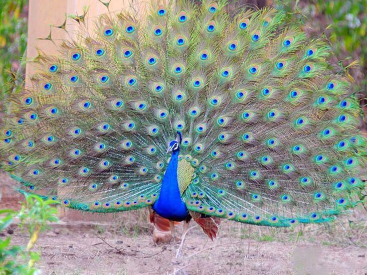 Bhoramdeo Wildlife Sanctuary - in Chhattisgarh, India