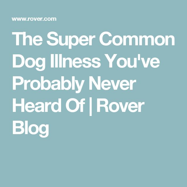 The Super Common Dog Illness You've Probably Never Heard Of   Rover Blog