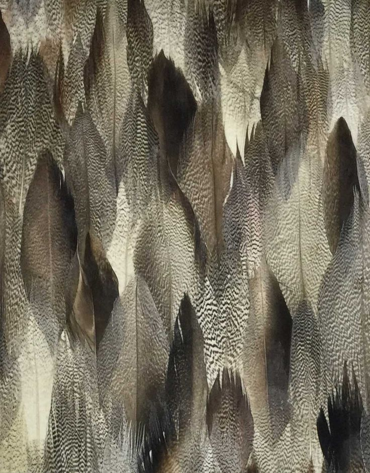 Real Peacock Feather Wallpaper Grass Pattern                                                                                                                                                                                 More