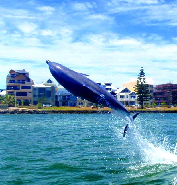 Dolphin missile launch Mandurah #dolphin #watching #cruise