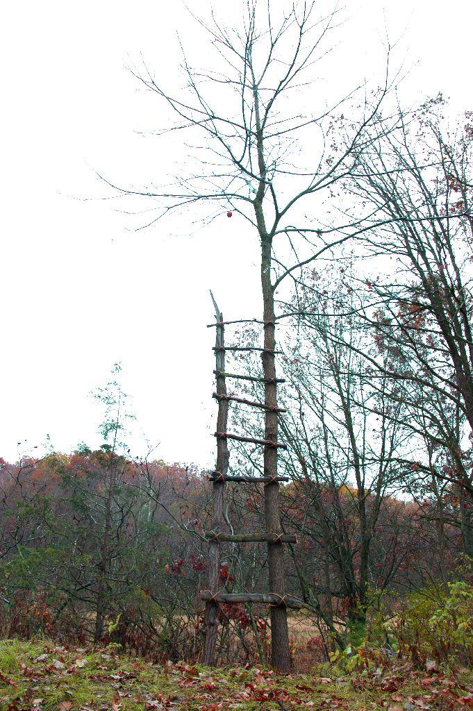 Ladder Oak tree, Rope installation by MyeongBeom Kim