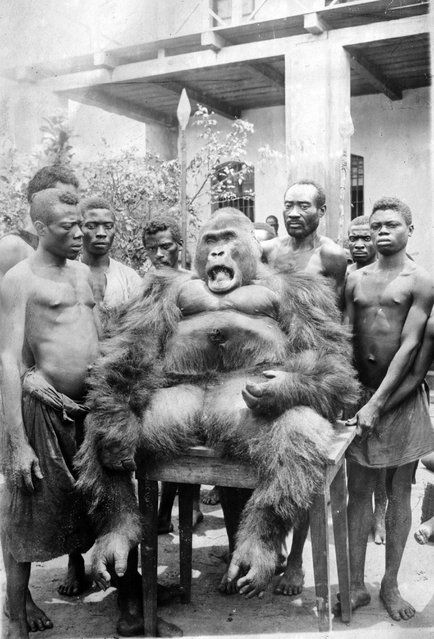 Tribesmen stand by a captive gorilla, circa 1925. (Photo by General Photographic Agency)