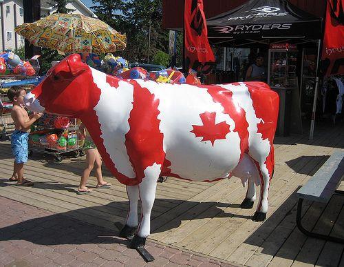 Big Canadian Cow, Sylvan Lake, Alberta, Canada | Flickr - Photo Sharing!