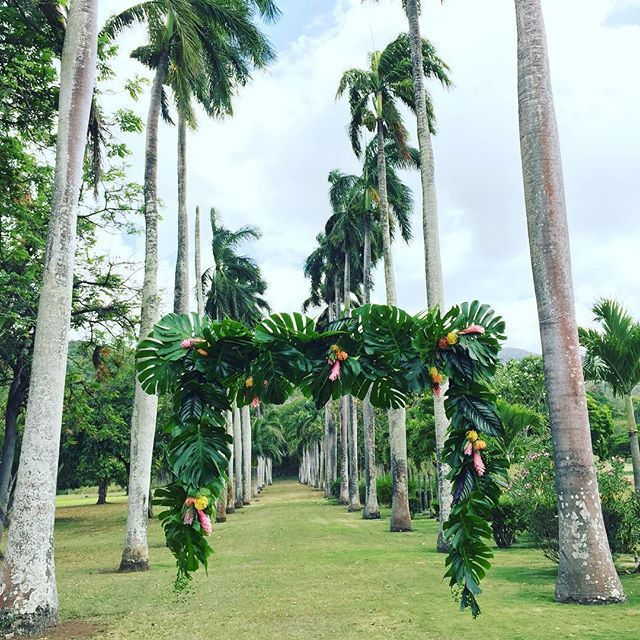 This suspending foliage arch by @flowergirlshawaii is everything. It sits so perfectly in between the row of Palm trees at Dillingham Ranch. #finishingtouchhawaii #finishingtouchweddings #hawaiiwedding #hawaiiweddingplanner #oahuwedding #oahuweddingplanner #destinationwedding #destinationweddingplanner #dillinghamranch #dillinghamranchwedding #tropicalwedding #monstera