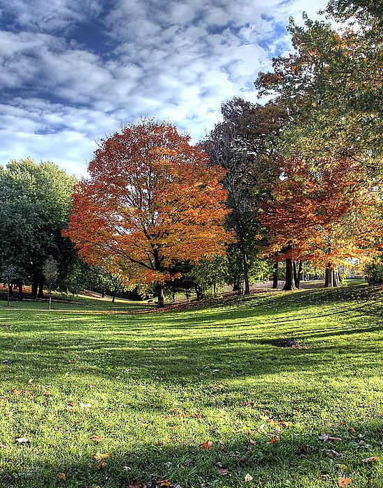 For a few weeks each fall, Monarch Park's trees show off their more colourful side. I've photographed the tree in the left centre of this image on a number of occasions. The late afternoon sun illuminated the fall colors and provided some nice long shadows in the foreground. #autumn, #leaves, #trees