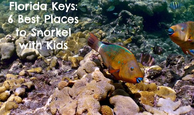 6 Best Places To Snorkel With Kids Parks Bahia And Honda
