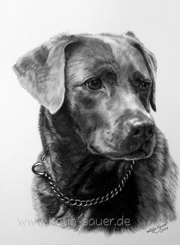 Dog drawings and dog portraits in charcoal / pencil and pastel crayon by …