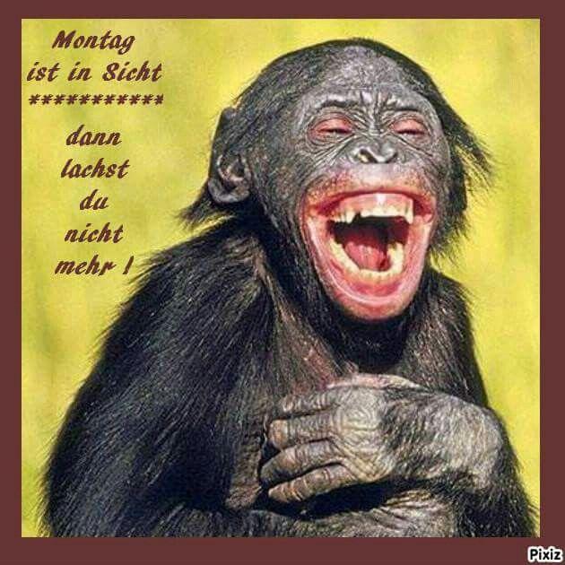 Lachen lustige Lustige Bilder