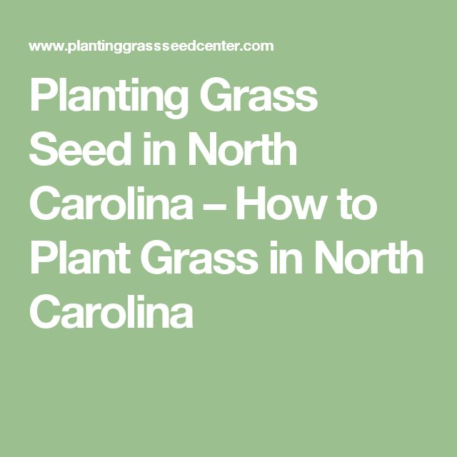 Planting Grass Seed in North Carolina – How to Plant Grass in North Carolina