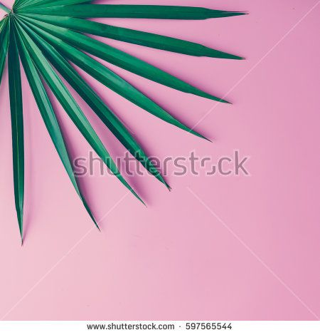 Tropical leaves on pastel pink background. minimal concept. Flat lay.