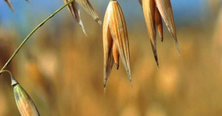 O medicamento GlutenEase é seguro para o tratamento da intolerância ao glúten?. Para algumas pessoas, o trigo é responsável por alguns problemas de saúde. Quer sofram de uma condição celíaca ou de uma alergia alimentar, essas pessoas podem revelar sintomas como dores abdominais, fadiga e depressão entre outras quando consomem alimentos que contêm trigo. Diz-se que alguns produtos, como o GlutenEase, contêm enzimas que ajudam ...