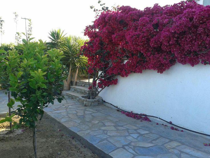 Our garden in Paros