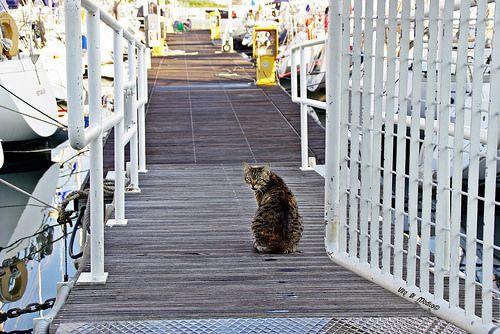 Il gatto del porto..