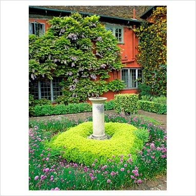 10 Images About Chartreuse Plants On Pinterest Perennials Golden Leaves And New Growth