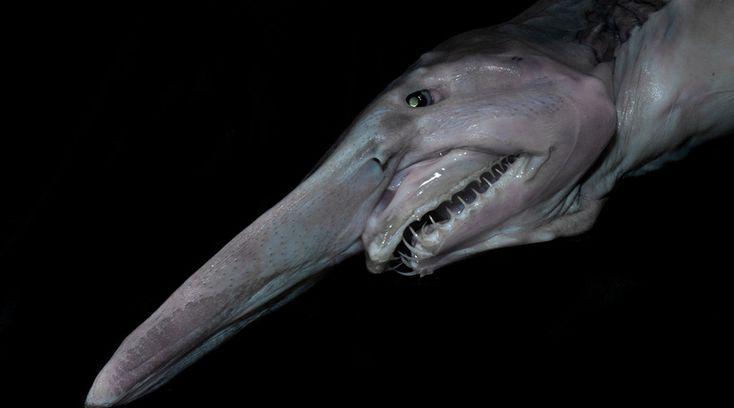 Самые страшные животные современности http://kleinburd.ru/news/samye-strashnye-zhivotnye-sovremennosti/