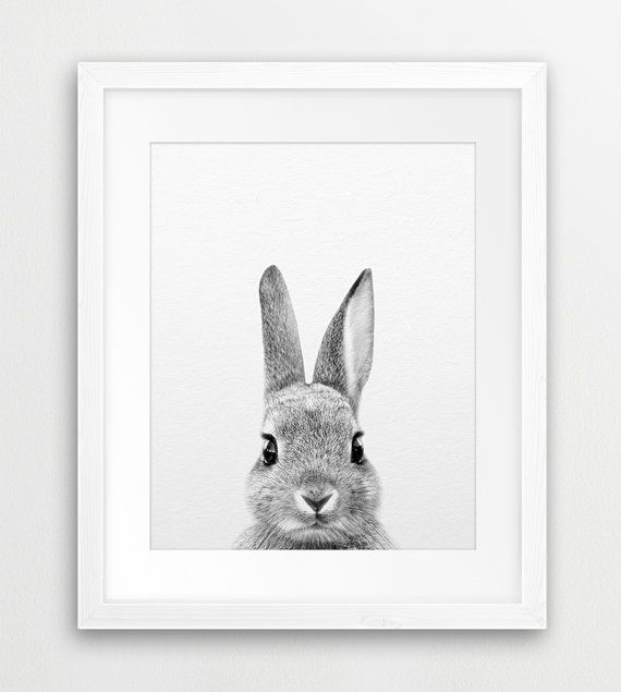 Rabbit print rabbit photography black and white animal by synplus