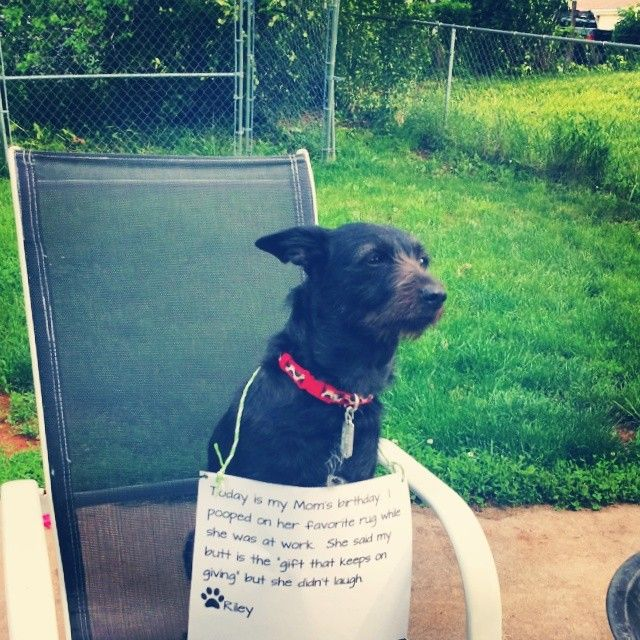 My Dog Peed On My Rug: 17 Best Images About Dog Shame On Pinterest
