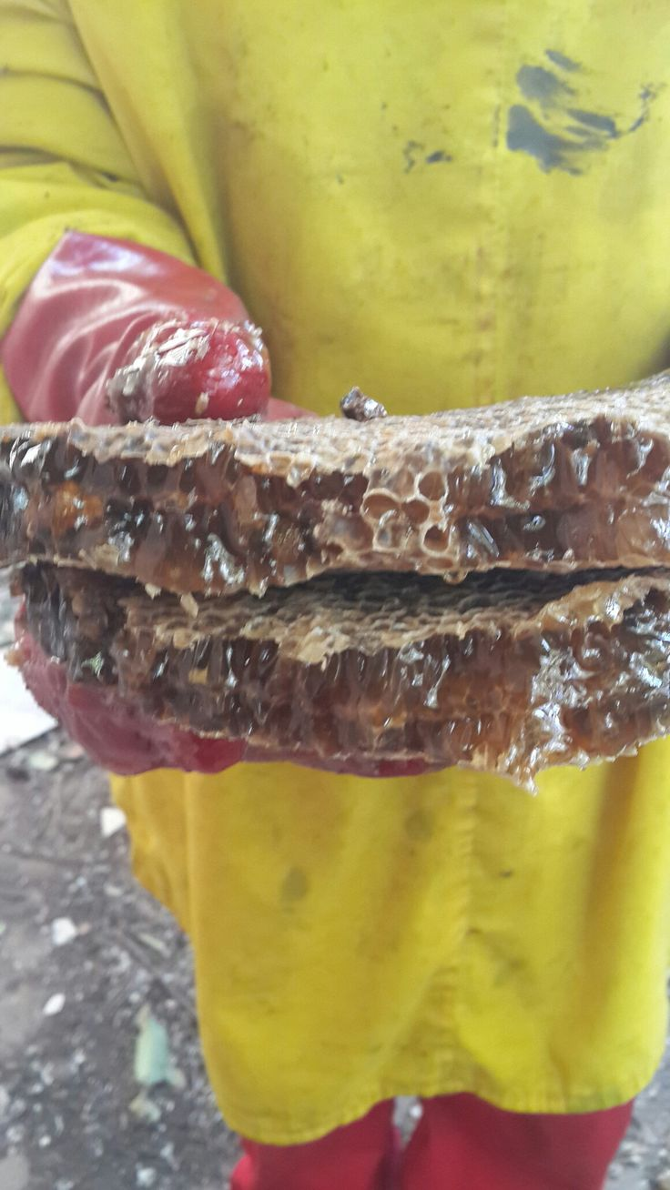 Bee removal in Johannesburg , removed bees in Alberton. Yummy honey