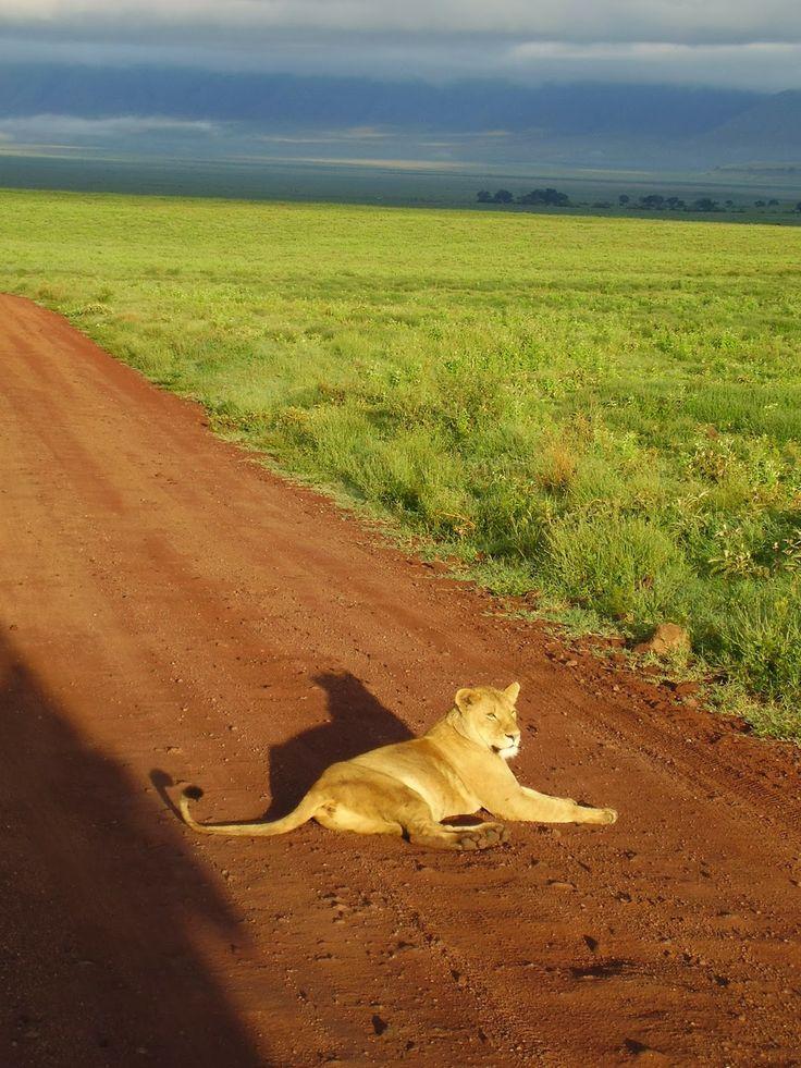 I parchi del nord della Tanzania: una vera meraviglia  http://www.travelstories.it/2014/02/i-parchi-della-tanzania-del-nord-una.html  #Tanzania #Africanparks #Ngorongoro #lions #Africanlandscapes #wildlife