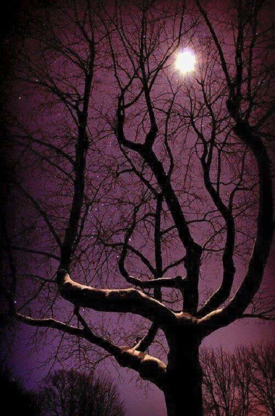 A holdfény a bizonyíték, hogy a sötétségben mindig lesz fény… (Németh György)
