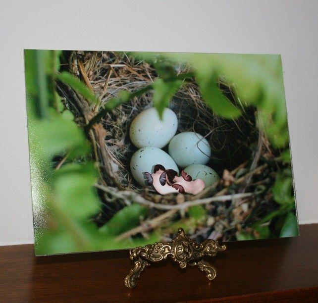 Nesting fairies in colour, A4 matt print £7.00: Print 7 00, Kid Bedrooms, Matt Print, Kids Bedroom, Nesting Fairies