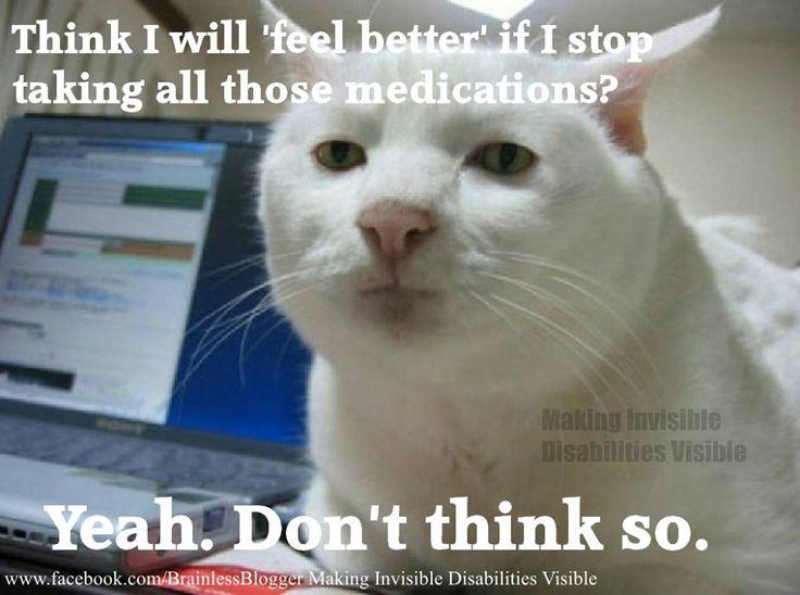 308fa3b6aa86d6224e7d7b9fe6479a56 funny cats funny animals 1247 best fibromyalgia, chronic illnesses educate yourself,Memes About Chronic Pain