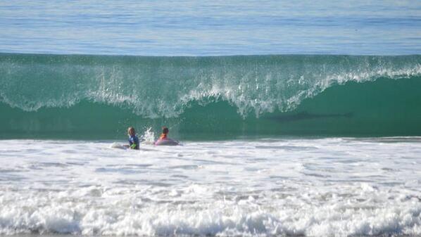 Shark photobombs surfers in California!