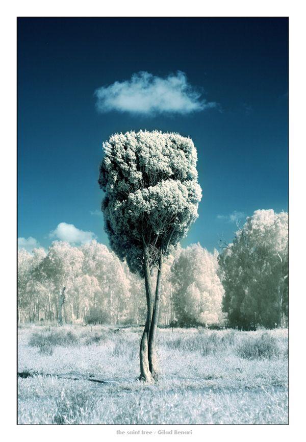 18 Naturally Beautiful Photos of Trees