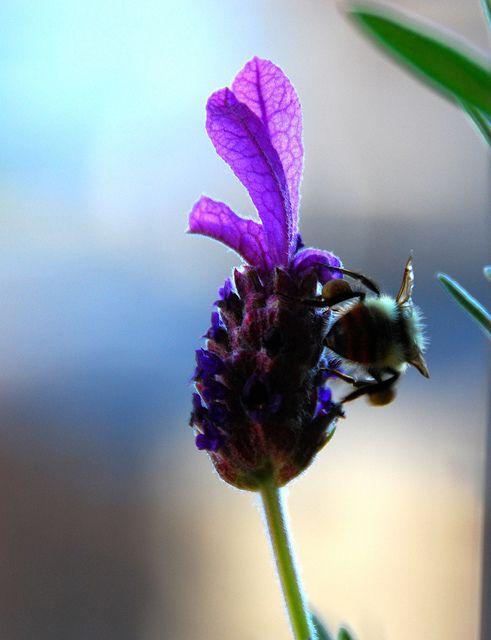 La importancia de la biodiversidad en el jardín