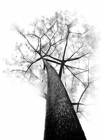 one tree by khoed66@gmail.com