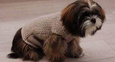 Un manteau pour chien