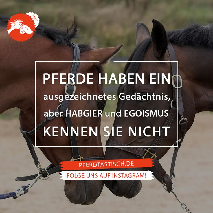 Mehr Fun & Fakten auf > pferdtastisch.de   #pferdtastisch #reiten #pferd #voltigieren #dressurreiten #springreiten #vielseitigkeitsreiten #geländereiten #jagdreiten #distanzreiten #orientierungsreiten #westernreiten #freizeitreiten #wanderreiten #formationsreiten #quadrillereiten #kunstreiten #pferderennen #reitsport #pony #tasthaare #tierschutz #pferdedenken #springpferd #sprungpferd #egoismus #habgier