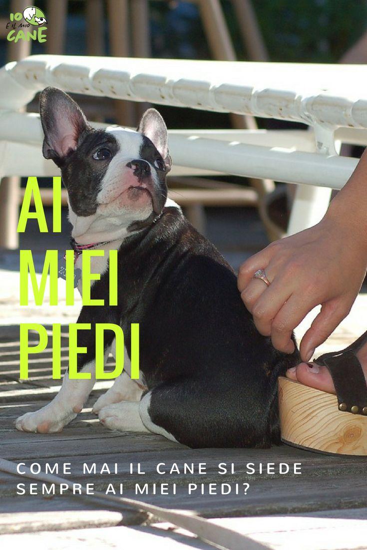 Sei curioso di sapere come mai il cane si siede ai tuoi piedi?