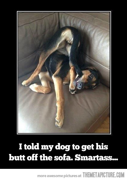 Smart dog…