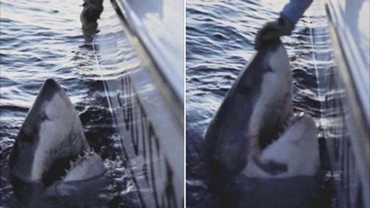 94 best images about shark called submaire and the real for Outcast sport fishing