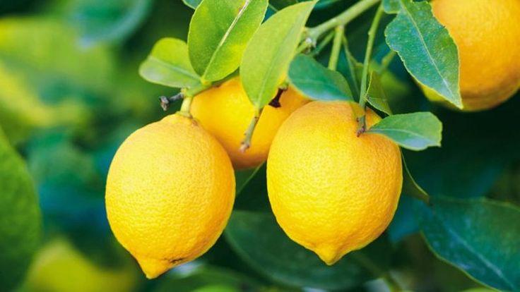 12 свойств лимонов, о которых вы не знали до сих пор