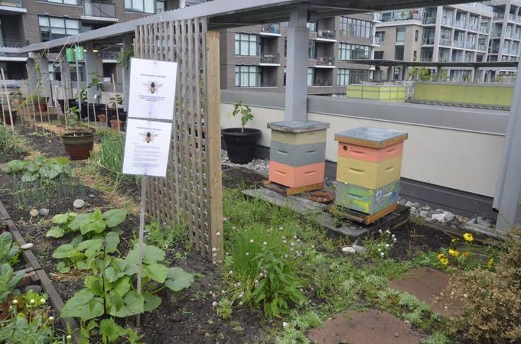 Athlete's Village Housing Cooperative's bee hives.